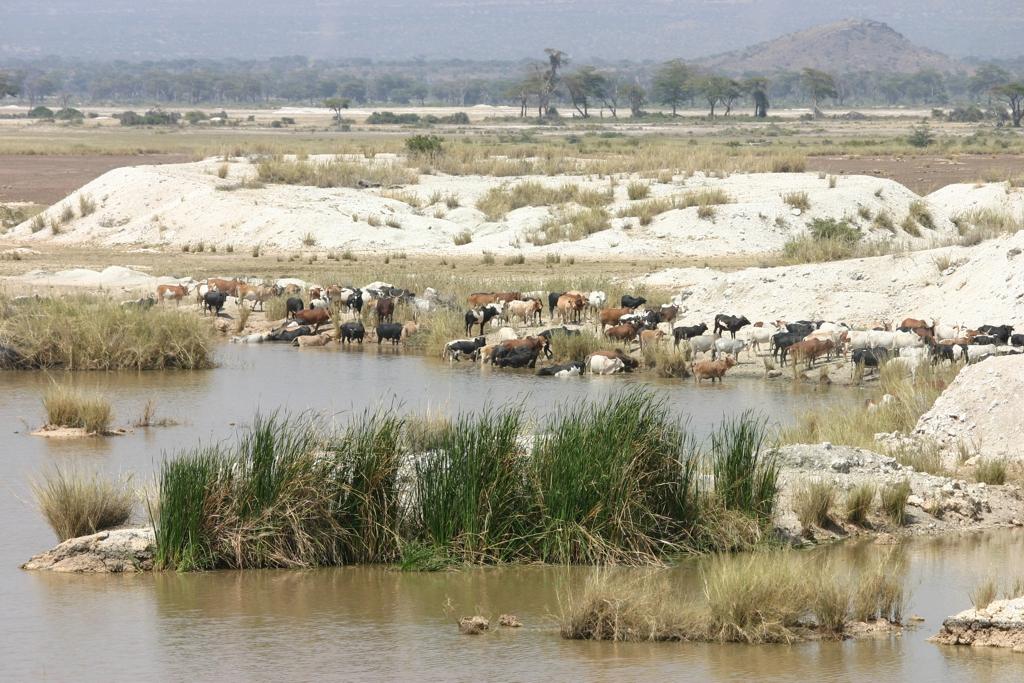 Wasserstelle der Massai mit Herde