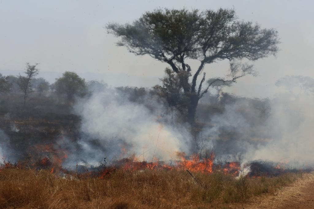Feuer in der Serengeti