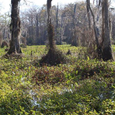 Florida, Sumpf