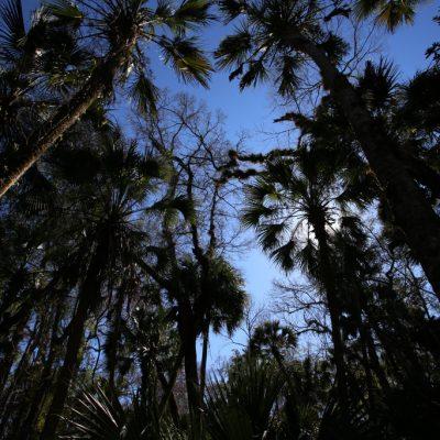 Florida, Palmen