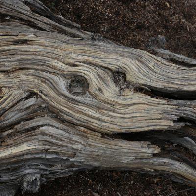 Holzstück im Joshua Tree NP